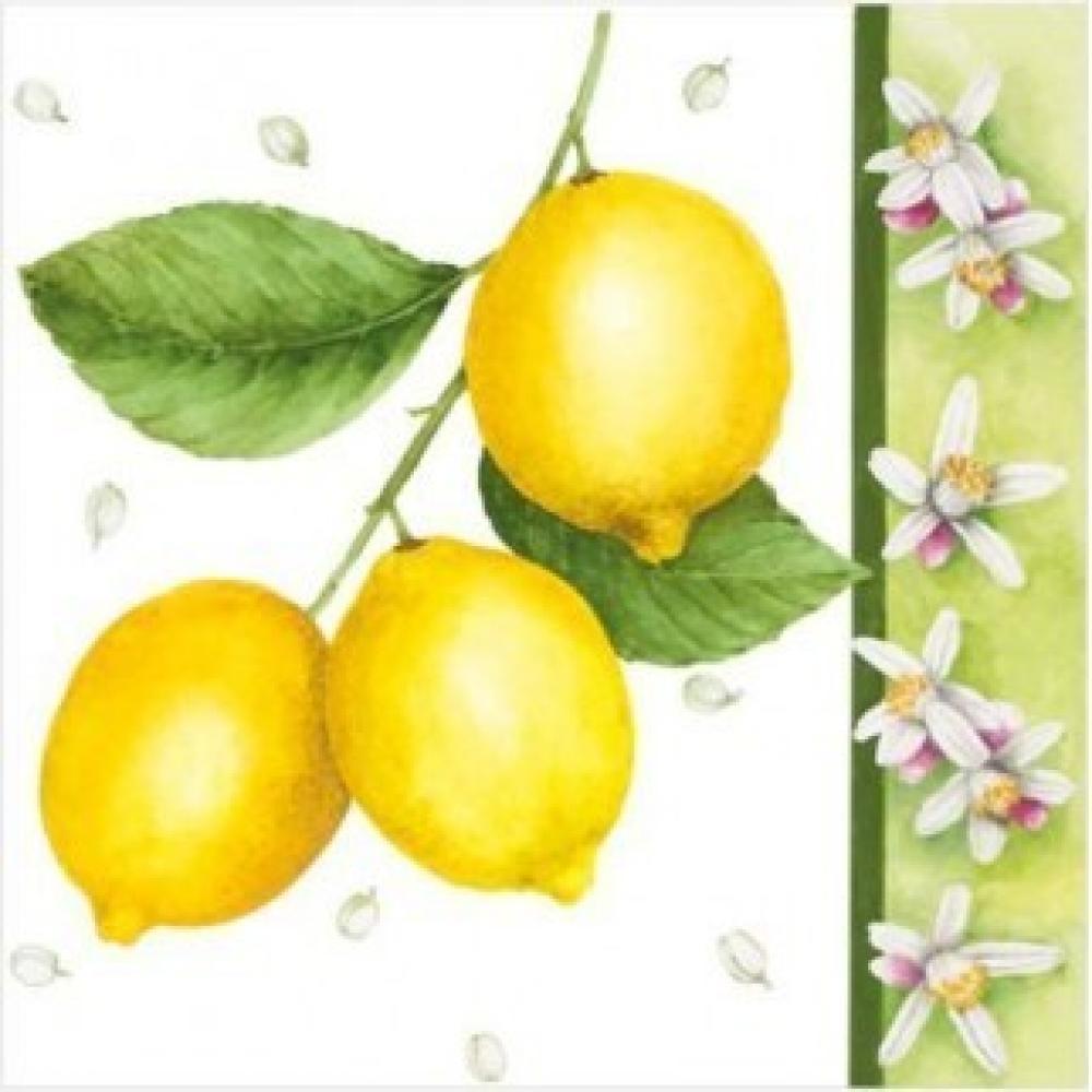 Salvetes 33x33cm citrus limon